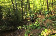 DTV Shredder – Forest Riding at Pastranaland